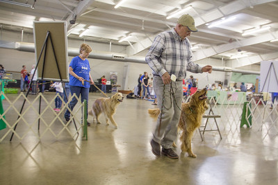 ALEC SMITH / GAZETTE Frank Schilling and Dianne Schilling of Brunswick brought golden retrievers Desi and Maggie to the Medina County Fairgrounds Community Center on Saturday as part of an adoption event called the Pet-Tacular. Desi and Maggie were practicing before an obedience contest.