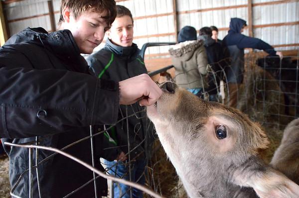 Baby calves at Cricket Creek Farm-012814