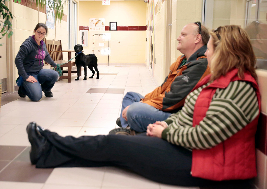. Peter Whitford and Judy Williamson, right, try to seem relaxed and non-threatening to Ross, a special needs dog who was rescued from an animal hoarder\'s home with 30 other dogs. Claudia Sala, left, serves as a familiar face for Ross to help him interact with new people at the Berkshire Humane Society in Pittsfield. Sunday, December 29, 2013. (Stephanie Zollshan   Berkshire Eagle Staff)