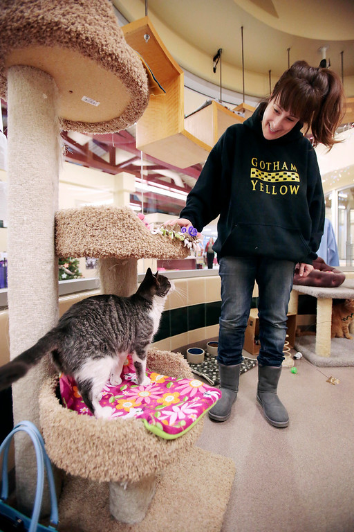 . Jill Wanderman visits with the cats in the cat room at the Berkshire Humane Society in Pittsfield. Sunday, December 29, 2013. (Stephanie Zollshan   Berkshire Eagle Staff)