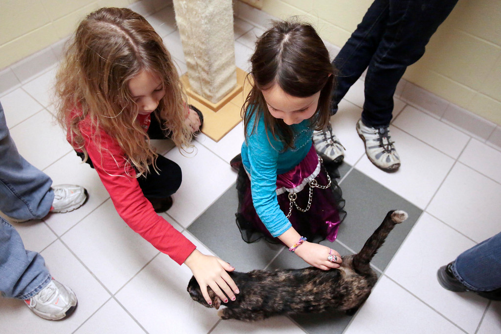 . Alex, 8, left, and Jordan Sotek, 5, play with Skittles, their new adopted cat, before they bring her home from the Berkshire Humane Society in Pittsfield. Sunday, December 29, 2013. (Stephanie Zollshan   Berkshire Eagle Staff)