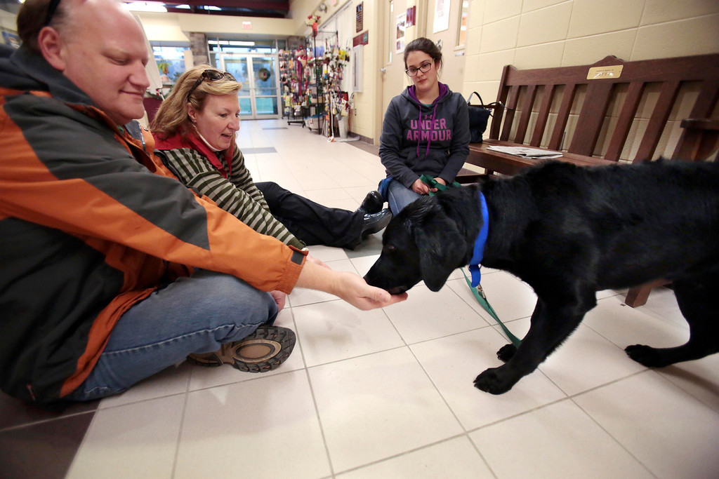 . Peter Whitford and Judy Williamson, left, try to seem relaxed and non-threatening while feeding bits of hot dog to Ross, a special needs dog who was rescued from an animal hoarder\'s home with 30 other dogs. Claudia Sala, right, serves as a familiar face for Ross to help him interact with new people at the Berkshire Humane Society in Pittsfield. Sunday, December 29, 2013. (Stephanie Zollshan   Berkshire Eagle Staff)