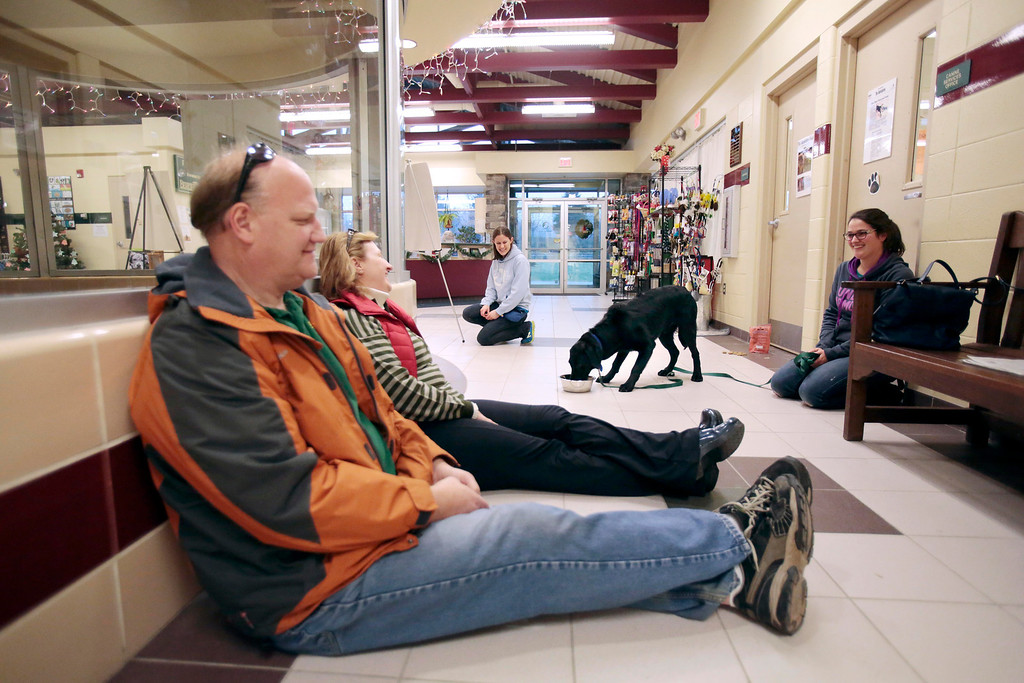 . Peter Whitford and Judy Williamson, left, try to seem relaxed and non-threatening to Ross, a special needs dog who was rescued from an animal hoarder\'s home with 30 other dogs. Adoption councelor Laura Mertzlufft, back, and Claudia Sala serve as familiar faces for Ross as they help him interact with new people at the Berkshire Humane Society in Pittsfield. Sunday, December 29, 2013. (Stephanie Zollshan   Berkshire Eagle Staff)