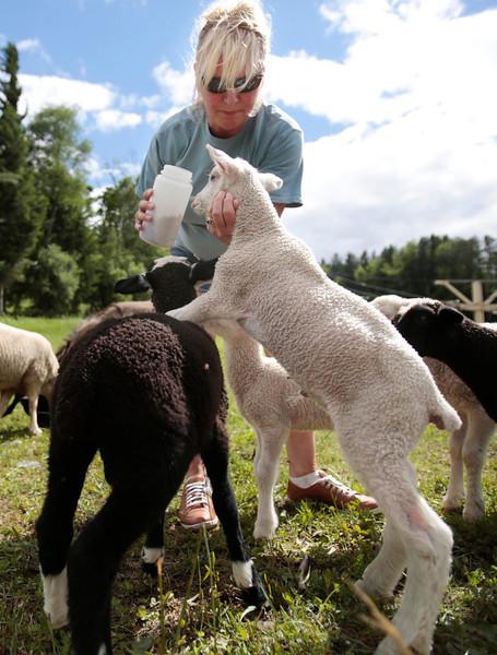 Feeding Farm Animals at Bousquet-060614