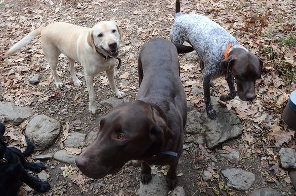 Greylock Canine Club Doggy Daycare-111014