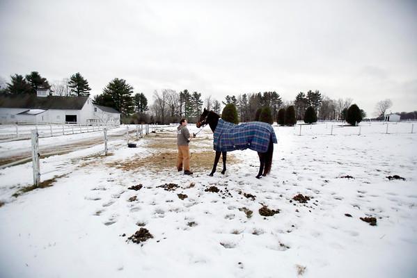 Horses in Richmond-121714