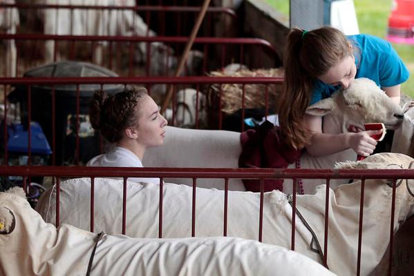 Massachusetts Sheep and Woolcraft Festival-052414