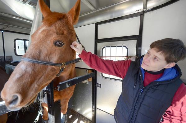 Wild Horses at Berkshire Humane Society-031614
