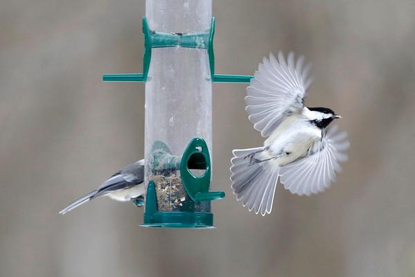 Winter Birds at Pleasant Valley-012115