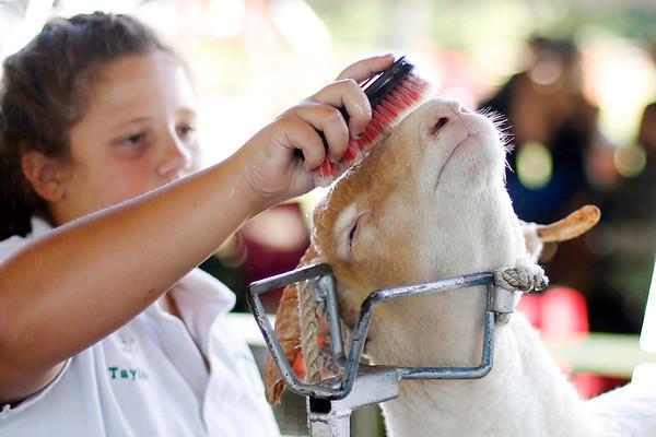 Annual 4-H Fair in Pittsfield-082016