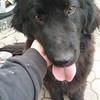 ONE LR041316 medical dog pic 2