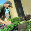 Globe/Roger Nomer<br /> David Morris, with Tender Care, lays out a flower bed at Commerce Bank at Third and Main on Monday morning.
