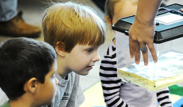 "Globe/T. Rob Brown<br /> Five-year-olds Taylor McMillian, 5, and Harry Heil peep at some tadpoles during the ""Jeepers, Spring Peepers"" amphibian program for small children Saturday morning, April 14, 2012, at the Wildcat Glades Conservation & Audubon Center in Joplin."