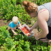 SAM HOUSEHOLDER | THE GOSHEN NEWS<br /> Tara Hickman of Goshen, picks strawberries with her son Roger, 2, at Yoder's U-Pick Strawberry Patch on 15th Street in Goshen Thursday. The break from the storms during the day Thursday made for a good day to get outside and pick fruit or any other outdoor activities.