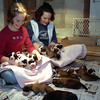 "THE GOSHEN NEWS PHOTO  February 15, 2000<br /> Hannah Boyd, 10, left and Nicole Boyd, 14, hold some of the 15 St. bernard puppies that were born Wednesday at the Boyd's Goshen home on C.R. 36. The puppies' mother, ""Kegger"" gave birth to 16 puppies but one died when it was being born."