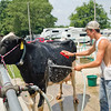 SAM HOUSEHOLDER | THE GOSHEN NEWS<br /> Mitch Perkins, of Stroh, washes his cow Haylee Monday at the LaGrange County Fair. The fair continues through Saturday.