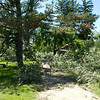 SAM HOUSEHOLDER | THE GOSHEN NEWS<br /> An area of Oakridge Cemetery is shown Thursday with many downed trees. MOre than 50 trees were damaged in storms earlier this week, an employee at the cemetery said.