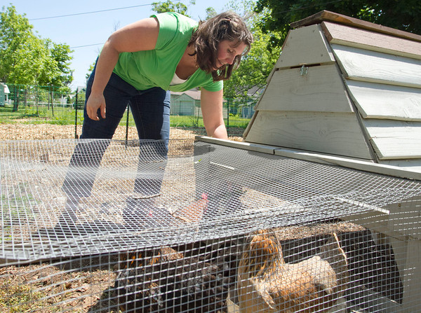 SAM HOUSEHOLDER | THE GOSHEN NEWS<br /> Heather Horst, of Goshen, feeds her chickens Friday in her backyard. Horst was one of the first residents to get chickens under the new chicken keeping ordinance.