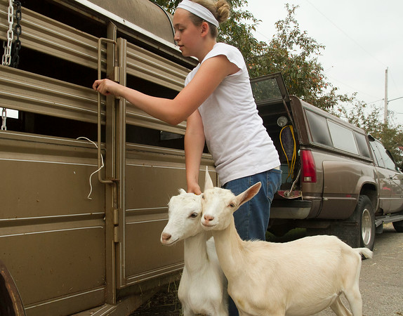 SAM HOUSEHOLDER | THE GOSHEN NEWS<br /> Riley Yermasek, 15, of Noble County, loads her goats into a trailer Saturday at the Elkhart County 4-H Fair. The fair finished its eight-day run Saturday.