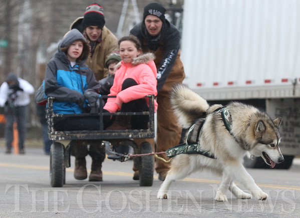 JAY YOUNG | THE GOSHEN NEWS<br /> Ten-year-old Adrianna Pratt, left, and eleven-year-old MacKenzie Michael, both of Syracuse, watch as an Alaskan Malamute named Nams digs his paws into the street while pulling them in a cart during a show of strength at a sled dog demonstration during the Wawasee Winter Carnival on Saturday in Syracuse.