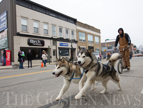 JAY YOUNG | THE GOSHEN NEWS<br /> A pair of Alaskan Malamutes pulls a bicycle down Main Street during a sled dog demonstration at the Wawasee Winter Carnival on Saturday in Syracuse.