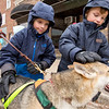 JAY YOUNG | THE GOSHEN NEWS<br /> Five-year-old Max Dellen, left, and his younger brother Bradley,4, both of Noblesville, get an up-close look at a five-year-old Siberian Husky named Hemlock during a sled dog demonstration at the Wawasee Winter Carnival on Saturday in Syracuse.