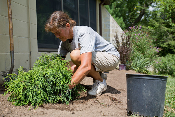 JAY YOUNG | THE GOSHEN NEWS<br /> Deb Good plants a cypress shrub in a memorial garden Wednesday afternoon as she prepares Oxbow Park for the 50th anniversary celebration.