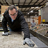 "JAY YOUNG | THE GOSHEN NEWS<br /> U.S. Senator Joe Donnelly smooths out a laminate topping at the Robert Weed Plywood factory during a ""Donnelly Days"" event on Monday morning."