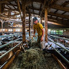 JAY YOUNG | THE GOSHEN NEWS<br /> Tristian Clark feeds goats while doing chores on the family farm Wednesday morning