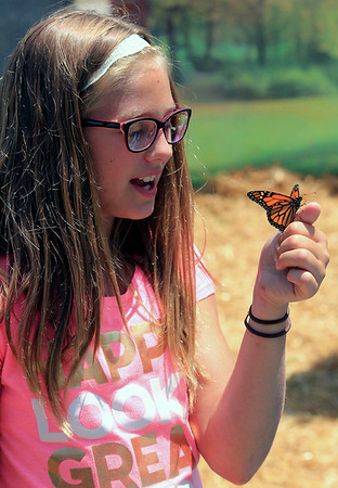 Roger Schneider   The Goshen News<br /> Kirstin Stutzman, 11, Middlebury, watches as a monarch butterfly lands on her had at the feed-the-butterflies attraction at the LaGrange County 4-H Fair Saturday.