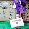 Roger Schneider | The Goshen News<br /> A blue ribbon marks John Kelly's grand champion entry in the entomology contest at the LaGrange County 4-H Fair Saturday.