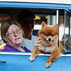 JAY YOUNG | THE GOSHEN NEWS<br /> Even pets got into the act during the July First Fridays Cruisin' Reunion in downtown Goshen Friday evening.