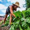 JAY YOUNG | THE GOSHEN NEWS<br /> Nicole Bauman tends to her crops Thursday afternoon at Red Oak Farm in Elkhart.