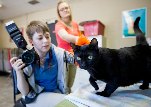 JAY YOUNG | THE GOSHEN NEWS <br /> Mithra, a domestic shorthair black cat explores her surroundings as Kelley VanField, left, and Rebecca Fortanberry try to get her to pause long enough for a picture Thursday afternoon at the Humane Society of Elkhart County in Bristol.