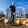 JAY YOUNG | THE GOSHEN NEWS<br /> After returning home from work, Goshen resident John Nafziger feeds his chickens in the garden behind his home Wednesday, March 22, 2017. Nafziger has raised chickens at his home since 2014, when the city of Goshen passed an ordinance allowing residents to raise chickens within the city limits.