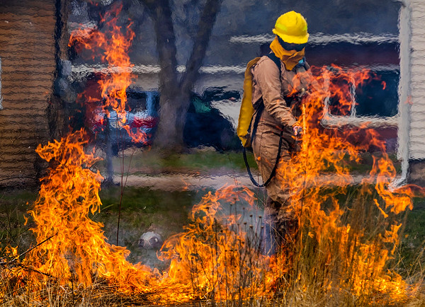 JAY YOUNG | THE GOSHEN NEWS<br /> Carol Lee, of Goshen, uses a water-filled backpack connected to a hose to contain flames Wednesday afternoon during a controlled burn of the native grass space in front of the Music Center on the campus of Goshen College.