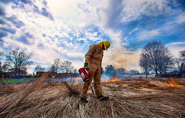 JAY YOUNG | THE GOSHEN NEWS<br /> Goshen College sophomore Stuart Fakhoury, of Indianapolis, uses a drip torch to light native grasses on fire Wednesday afternoon during a controlled burn of the native grass space in front of the Music Center on the campus of Goshen College.