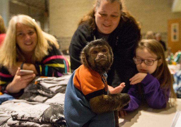 JAY YOUNG | THE GOSHEN NEWS<br /> From left, Traci Carr, Brooke Olinger and Melloni Olinger, 7, play with Jessie, an eight-year-old Capuchin monkey that rides on motorcycles, at the Abate of Indiana's 32nd annual Region One Elkhart County Swap Meet on Sunday morning at the Northern Indiana Event Center in Elkhart.