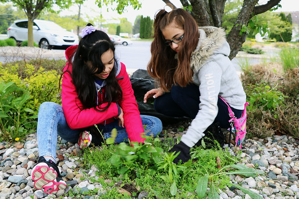 JOHN KLINE | THE GOSHEN NEWS<br /> Tashina Garcia, 12, left, and Lesly Lopez, 11, both fifth graders at Model Elementary School, help pull weeds at the Life Center on the city's west side during the second annual Goshen Community Schools Student Service Day Tuesday morning.