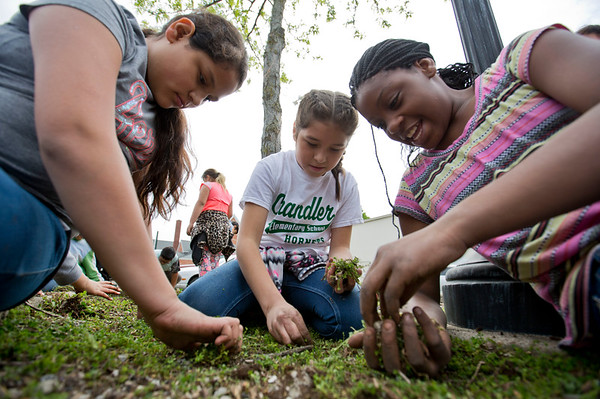 JAY YOUNG | THE GOSHEN NEWS<br /> Fifth-grade students from Chandler Elementary School, from left, Natali Oviedo, Johanna Santos and Tashanti McGee chat while pulling weeds in a city parking lot median as part of a service day project Wednesday afternoon.