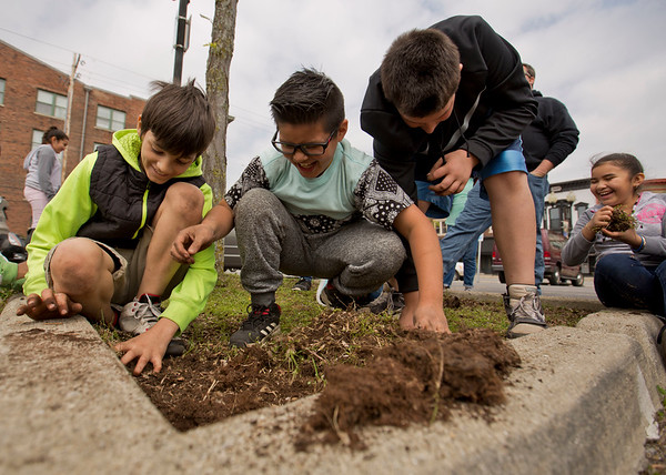 JAY YOUNG   THE GOSHEN NEWS<br /> Fifth-grade students from Chandler Elementary School, from left, Tanner Bryan, Gustavo Gonzalez and Ryan Eldridge, react as they discover a large colony of ants while pulling weeds in a city parking lot median as part of a service day project Wednesday afternoon.