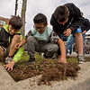 JAY YOUNG | THE GOSHEN NEWS<br /> Fifth-grade students from Chandler Elementary School, from left, Tanner Bryan, Gustavo Gonzalez and Ryan Eldridge, react as they discover a large colony of ants while pulling weeds in a city parking lot median as part of a service day project Wednesday afternoon.