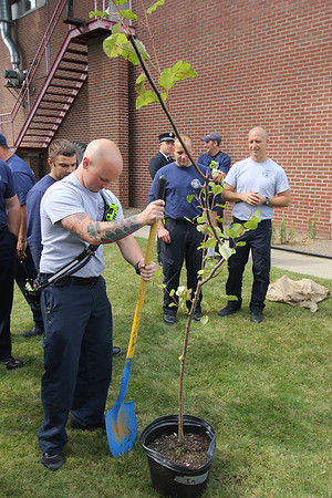 ADAM RANDALL | THE GOSHEN NEWS<br /> Goshen Fire Department Pfc. Camron Haberstich prepares to dig a hole in front of the Goshen Central Fire Station on Third Street where the 9/11 sapling was planted.