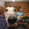 LEANDRA BEABOUT | THE GOSHEN NEWS<br /> Visiting greyhound Murry looks on as Nova Floyd, 4, and her mother Alejandra Floyd, both of Goshen, read together at the Goshen Public Library. The Greyt Readers program occurs twice a month at the library.