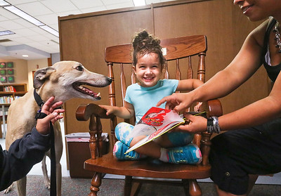 LEANDRA BEABOUT | THE GOSHEN NEWS Four-year-old Nova Floyd, of Goshen, smiles as she visits with greyhound Murry while listening to her mother, Alejandra Floyd, read a book. Murry was brought to Goshen Public Library by American Greyhound volunteer Heather Peyatt, of Cromwell, for the library's Greyt Read. Her mother, Alejandra Floyd helps her read a book. Murry is held by Peyatt is a volunteer for American Greyhound's Greyt Readers program, which occurs twice a month.