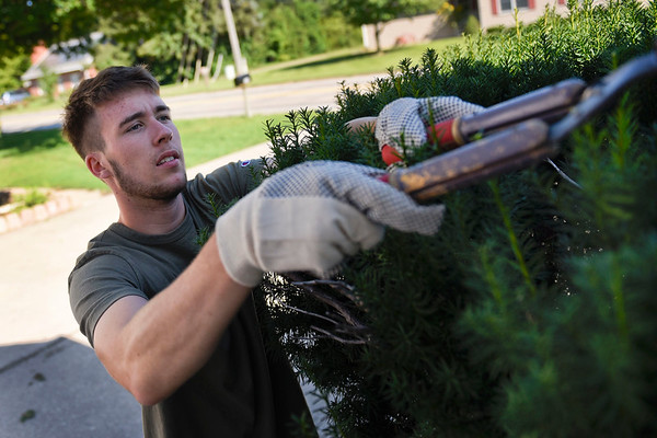BEN MIKESELL | THE GOSHEN NEWS<br /> Goshen College sophomore soccer player Sven Badstieber, of Germany, trims a bush outside a rental home Wednesday morning along College Avenue near campus. The men's and women's soccer teams spent the morning landscaping as part of a community service day.