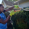 BEN MIKESELL | THE GOSHEN NEWS<br /> Goshen College senior soccer player Ari Benjamin, of Trinidad and Tobago, trims a bush outside a rental home Wednesday morning along College Avenue near campus. The men's and women's soccer teams spent the morning landscaping as part of a community service day.