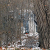 Roger Schneider | The Goshen News<br /> A path through a stand of trees leads to this camp in Goshen.
