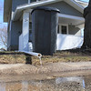 Roger Schneider | The Goshen News<br /> A pipe carrying water from a sump pump at 120 Huron St., Goshen, empties onto the streat. While record flood waters are receding, homeowners are now dealing with cleaning up their properties.