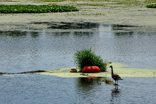 BEN MIKESELL | THE GOSHEN NEWS<br /> Plants grow around a buoy on the Goshen Dam Pond in this July 2018 file photo. The long-awaited pond dredging project has been delayed yet again.